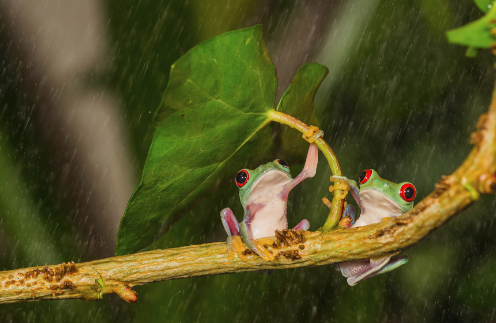 6. Гламурный зонтик. (Фото Vyacheslav Mishchenko):