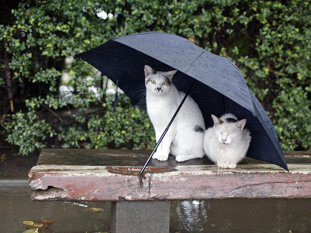 8. Грибные зонтики. (Фото Alonk's Roby):