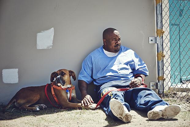 Через три месяца работа заключенных подошла к концу, а собакам выдали сертификаты Canine Good Citize