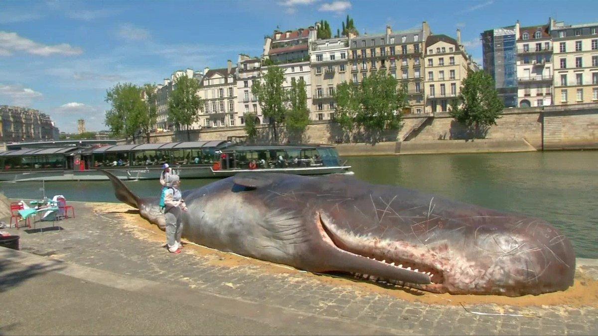 Статую кита на набережной установили авторы проекта Captain Boomer, названного в честь персонажа ром