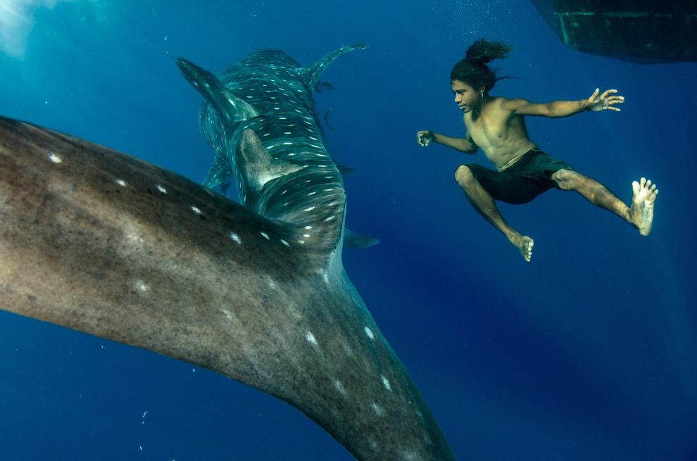 3. Китовая акула способна при кормёжке пропускать через пасть до 6 тыс. кубометров воды в час! Набра