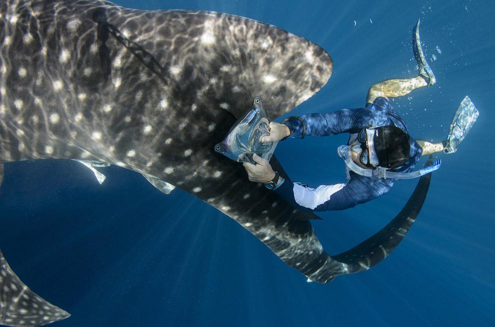 5. Обитает эта красавица в тёплых водах тропических широт по всему Мировому океану. (Фото Pete Oxfor