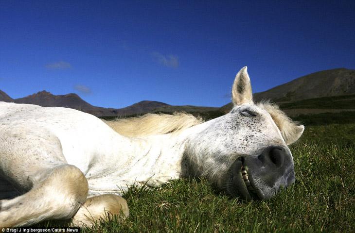 Фотограф из Исландии Bragi J Ingibergsson:  1. «Мне нравится фотографировать лошадей, они оч