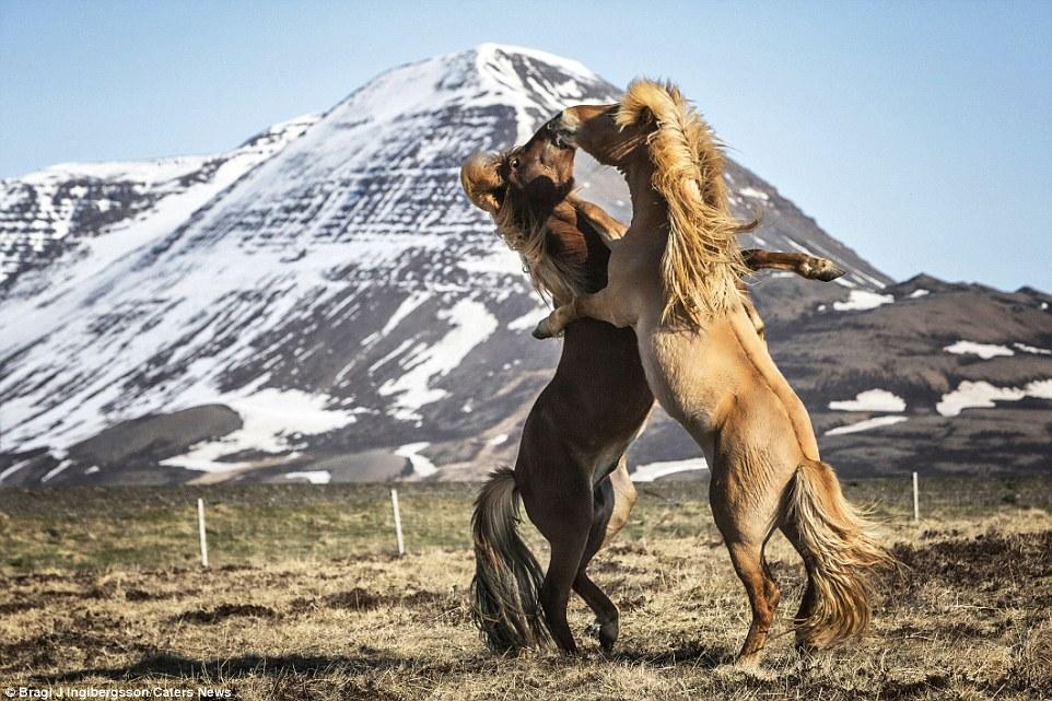 4. Эволюция лошадей хорошо документирована ископаемыми, которые свидетельствуют о том, как небо