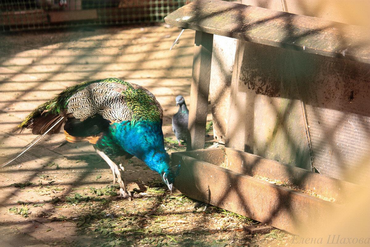 Птица-26.jpg