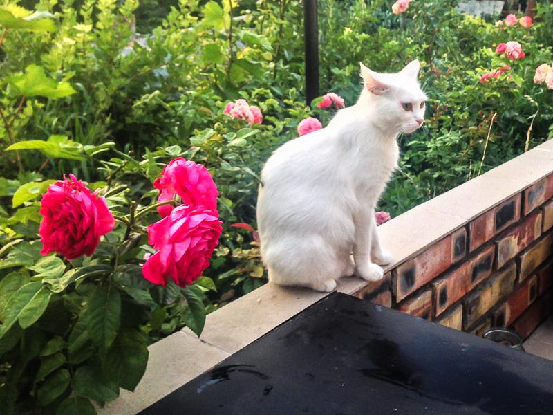 Принцесса и розы