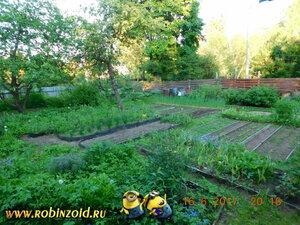 вечерний огород