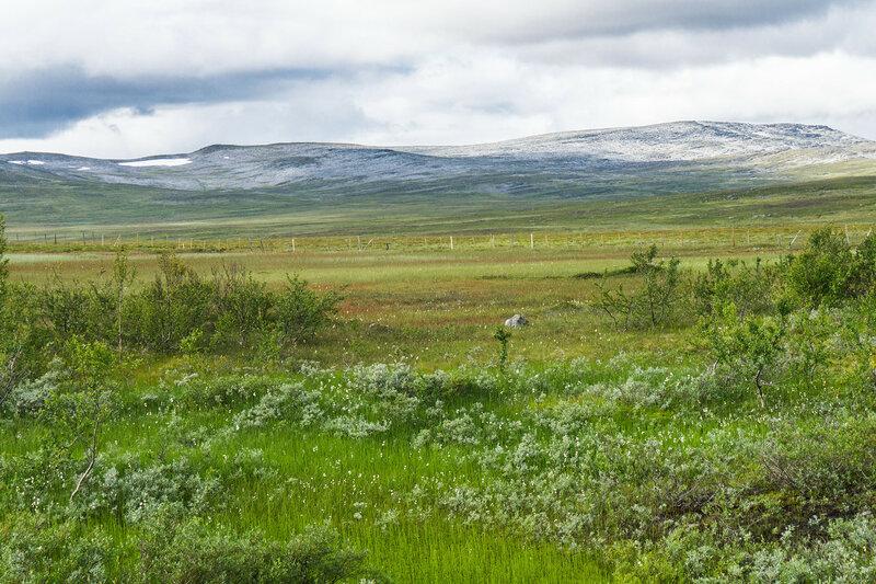 северный пейзаж с тундрой и горами в норвегии, финнмарк