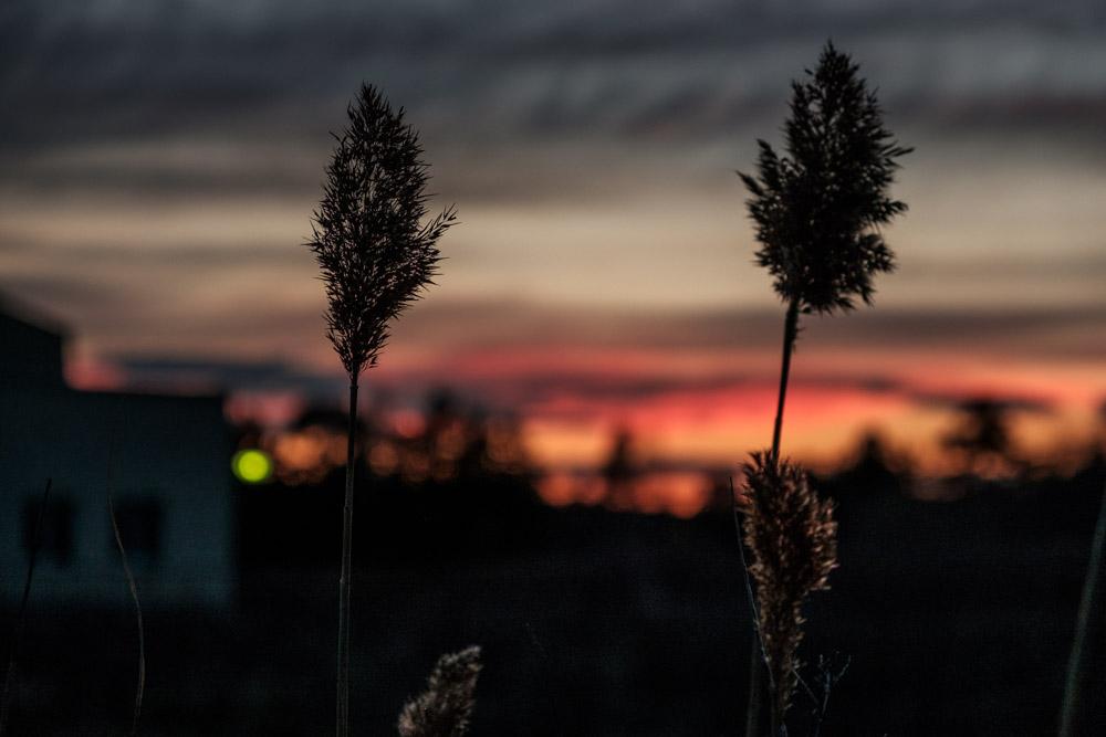 фотографирование на закате двух сухих травинок на фоне неба