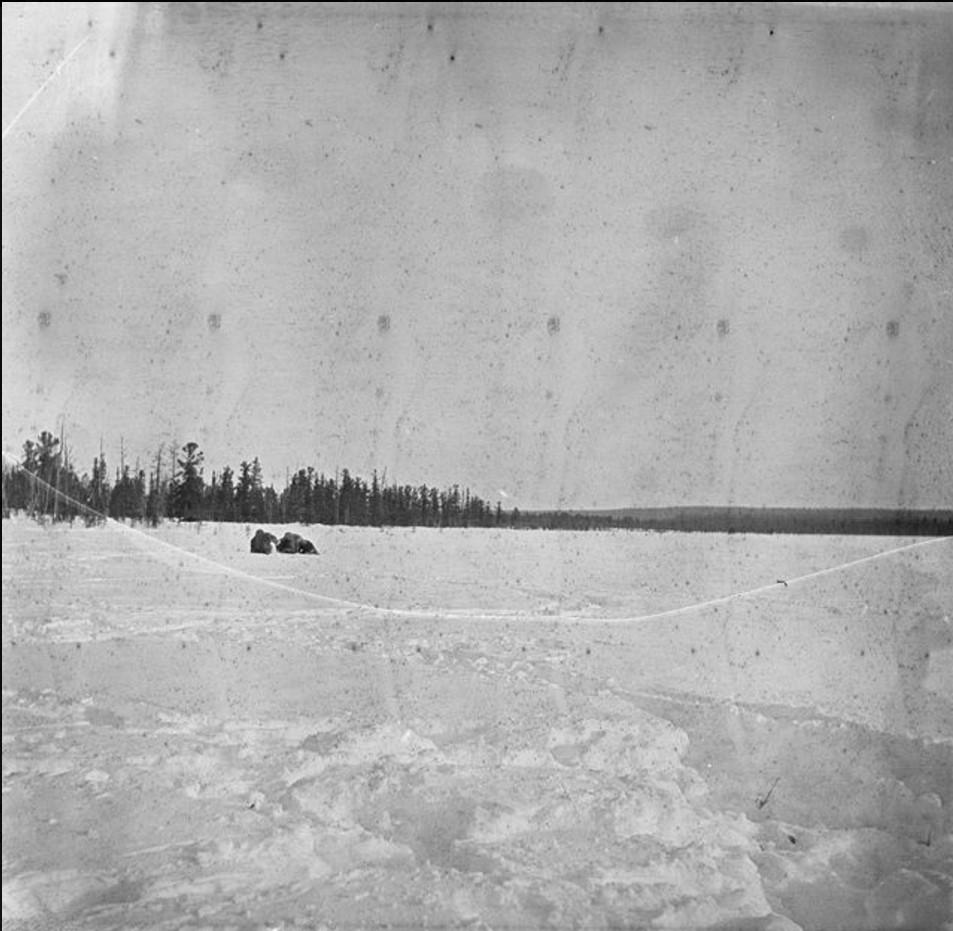 Снежный пейзаж арктической тундры