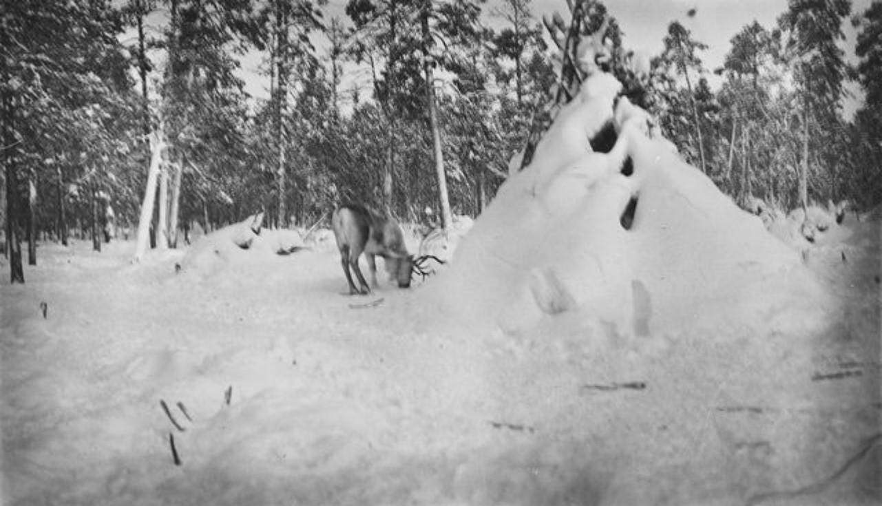 62. Олени и хижина в зимнем лесу