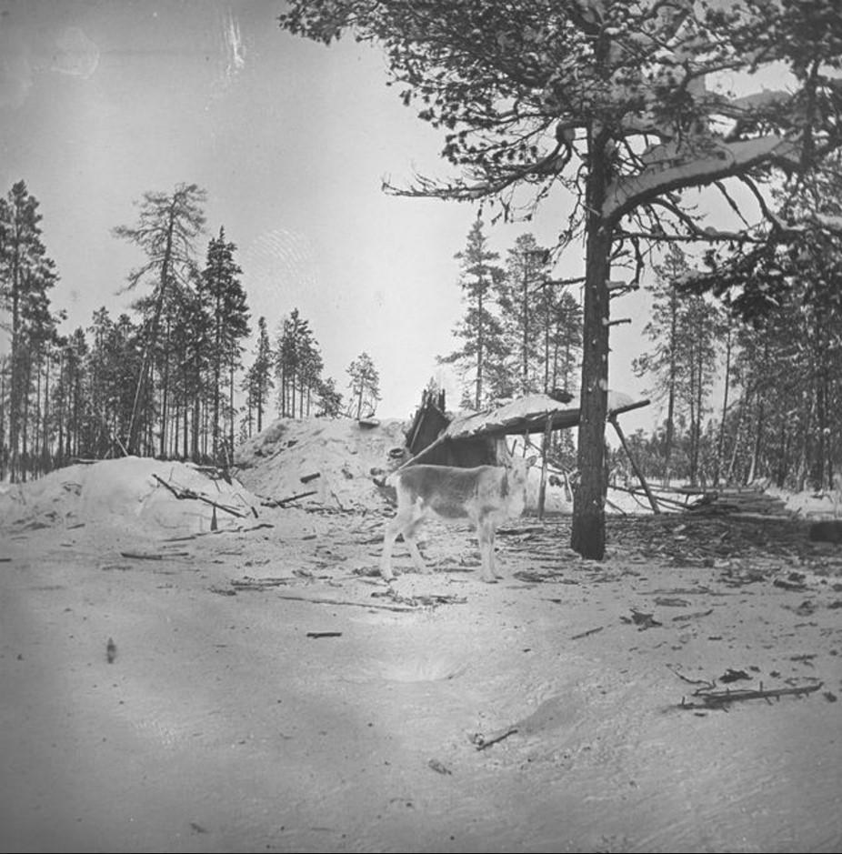64. Олени в зимнем лесу