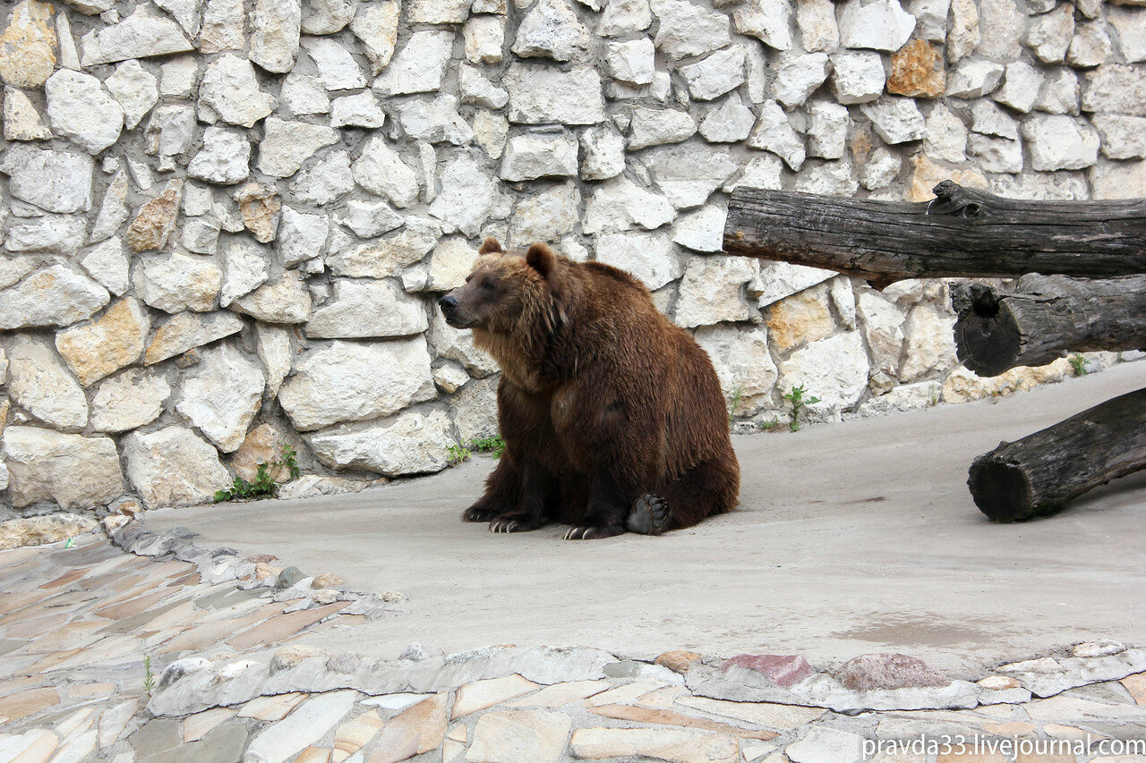Московский зоопарк-16.jpg