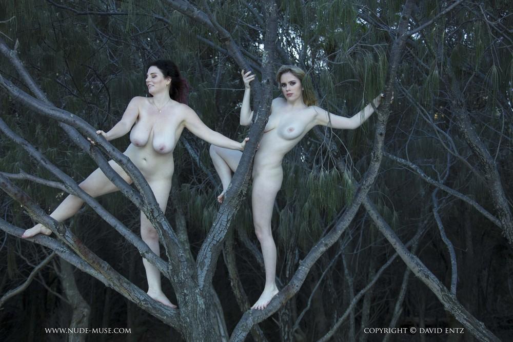 Avalon и Velvet Rose позируют на дереве