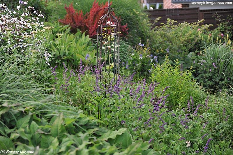 Salvia verticillata Purple Rain (6).JPG
