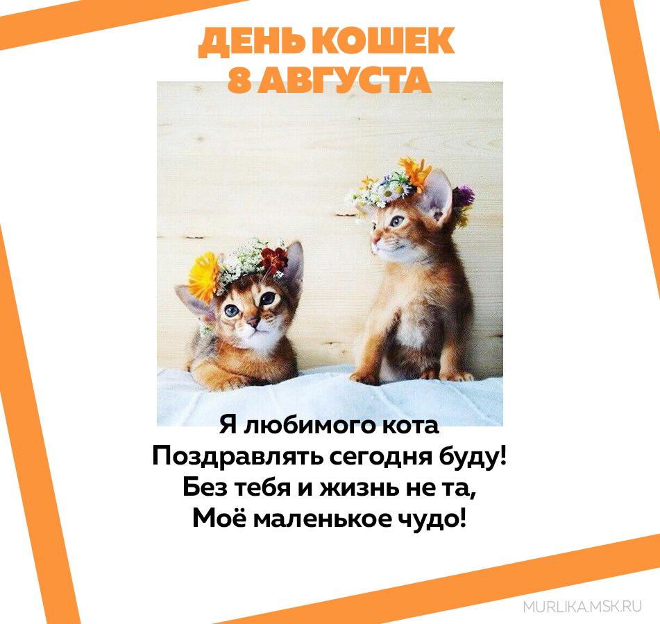 8 августа всемирный день кошек фото
