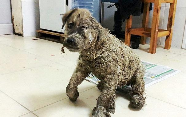 Как спасали собаку, которую жестокие дети облили промышленным клеем и бросили умирать (10 фото)