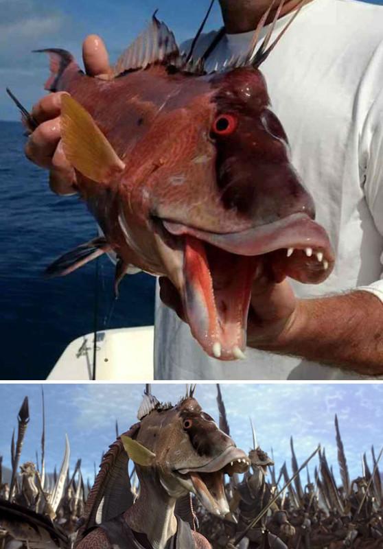 Рыба очень напоминает Джа-Джа Бинкса.