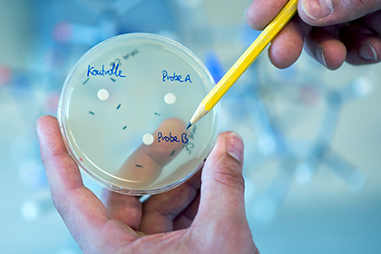 Ученые: Пенициллин делает ребенка неменее агрессивным