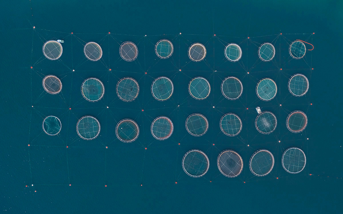 Surreal Aerial Views of Fish Farms Captured by Bernhard Lang
