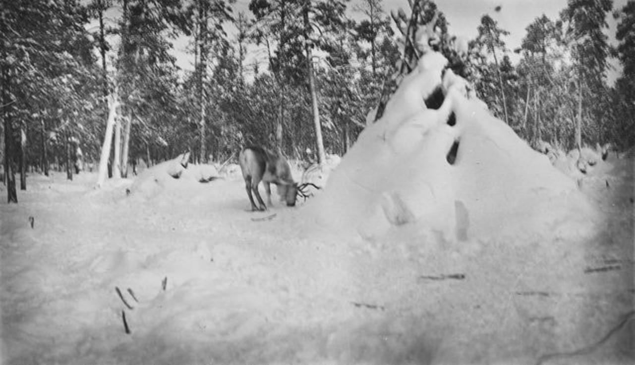 Олень и хижина в лесу