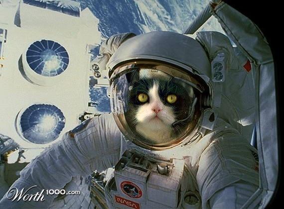 космос-кот-1.jpg