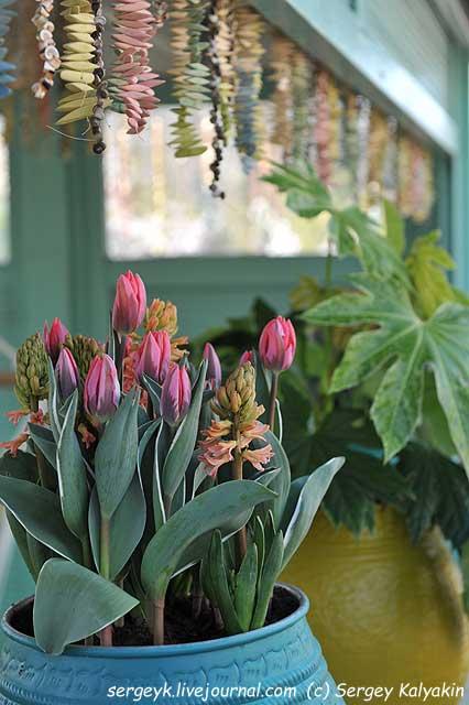 Inspirational Garden 5 (4).JPG
