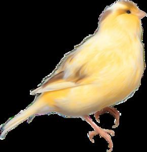 yellow birds