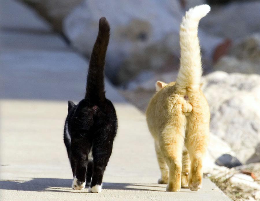 как различить кота от кошки фото