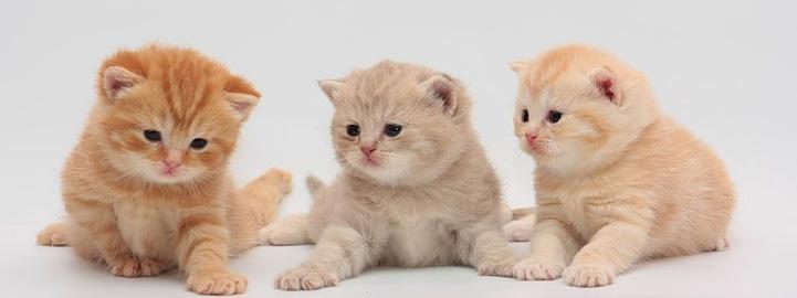 Как различить кота от кошки