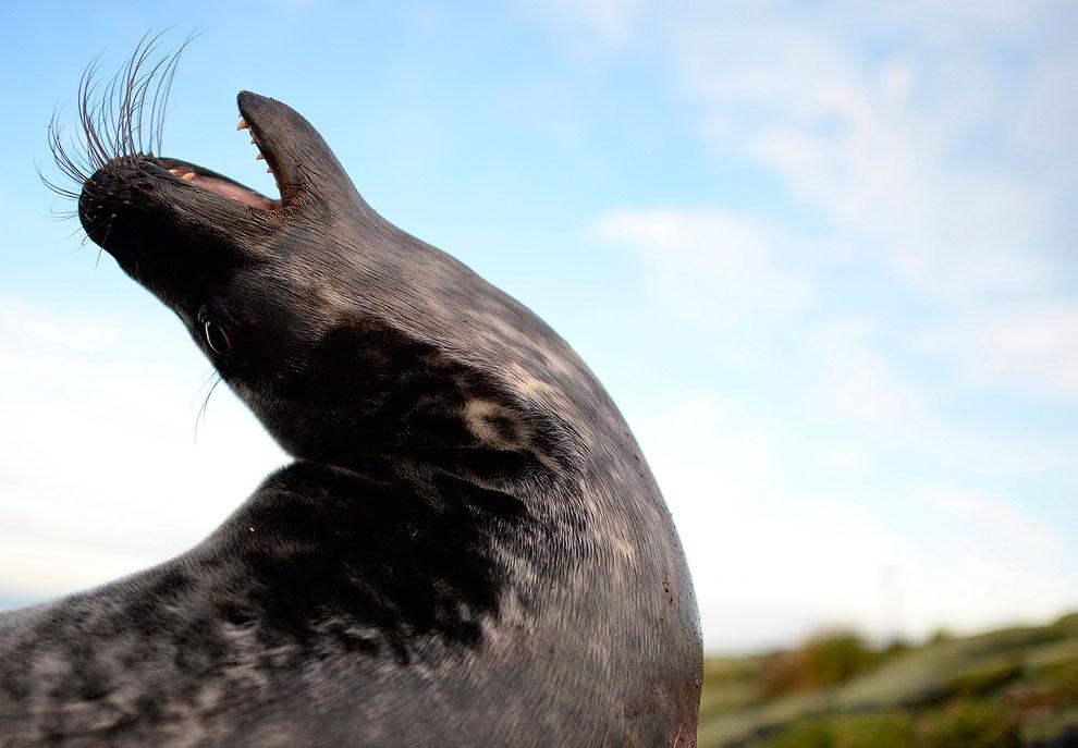 Полярная крачка. Длина птицы — около 40 см. Весной и летом клюв становится красным. (Фото Dan K