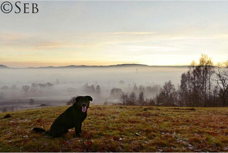 Счастливая собака на фоне долины, которая практически полностью погрузилась в туман. Фотография Себа