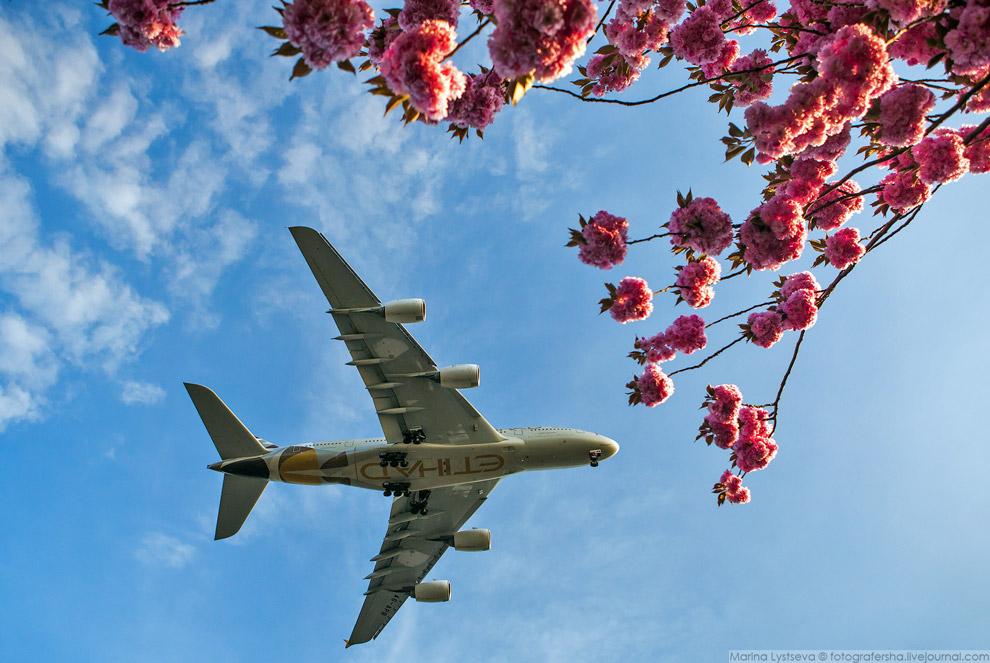 17. Недавно Airbus представил новую концепцию оформления премиального класса салонов самолётов