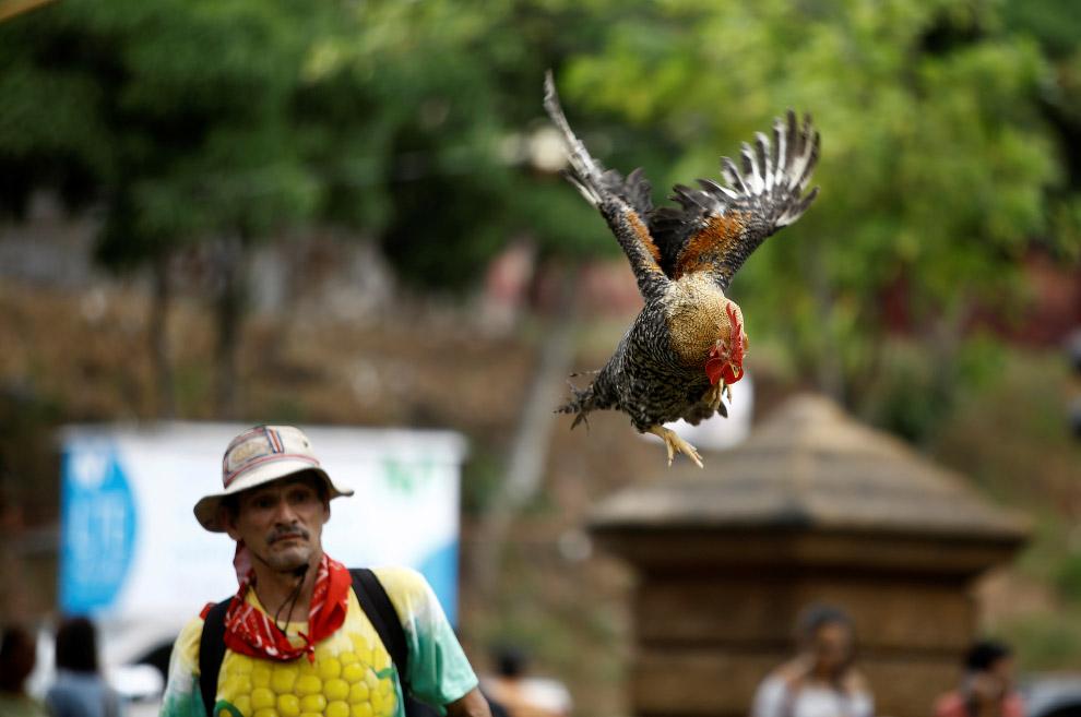 10. Полное взаимопонимание. (Фото Juan Carlos Ulate | Reuters):