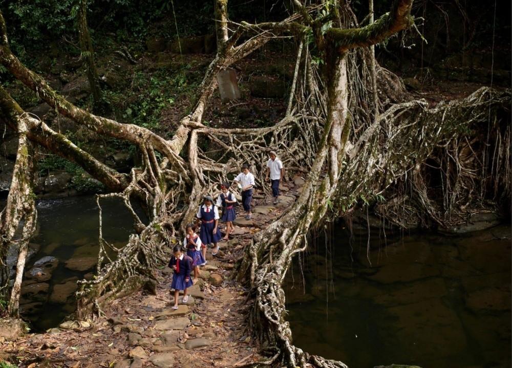 16. Мост из корней деревьев.