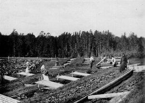 Работники за поливкой огорода в парниковом хозяйстве монастыря.