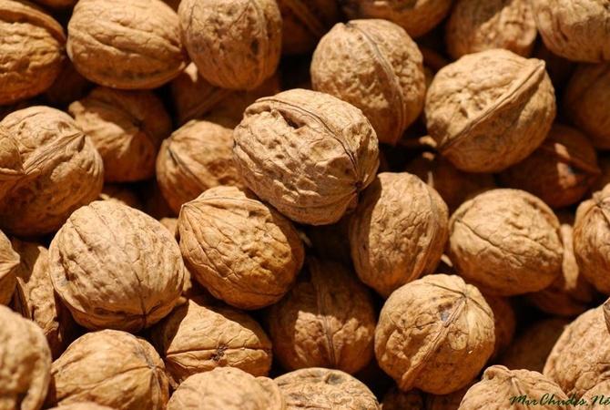 Украина занимает первое место вевропейских странах поэкспорту грецких орехов
