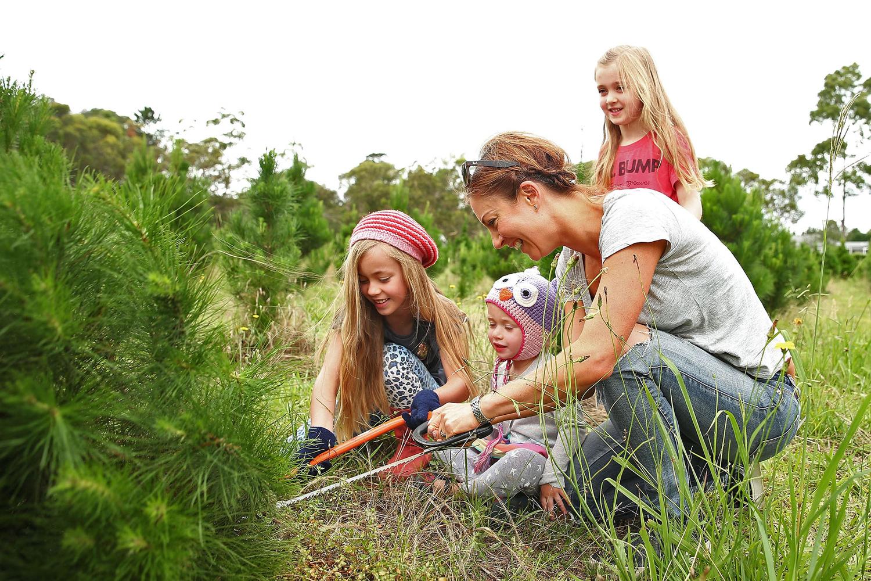 Семья выбирает новогоднюю елку на лесной ферме в Сиднее.
