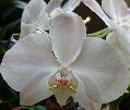 Цветы на моем участке. Орхидеи