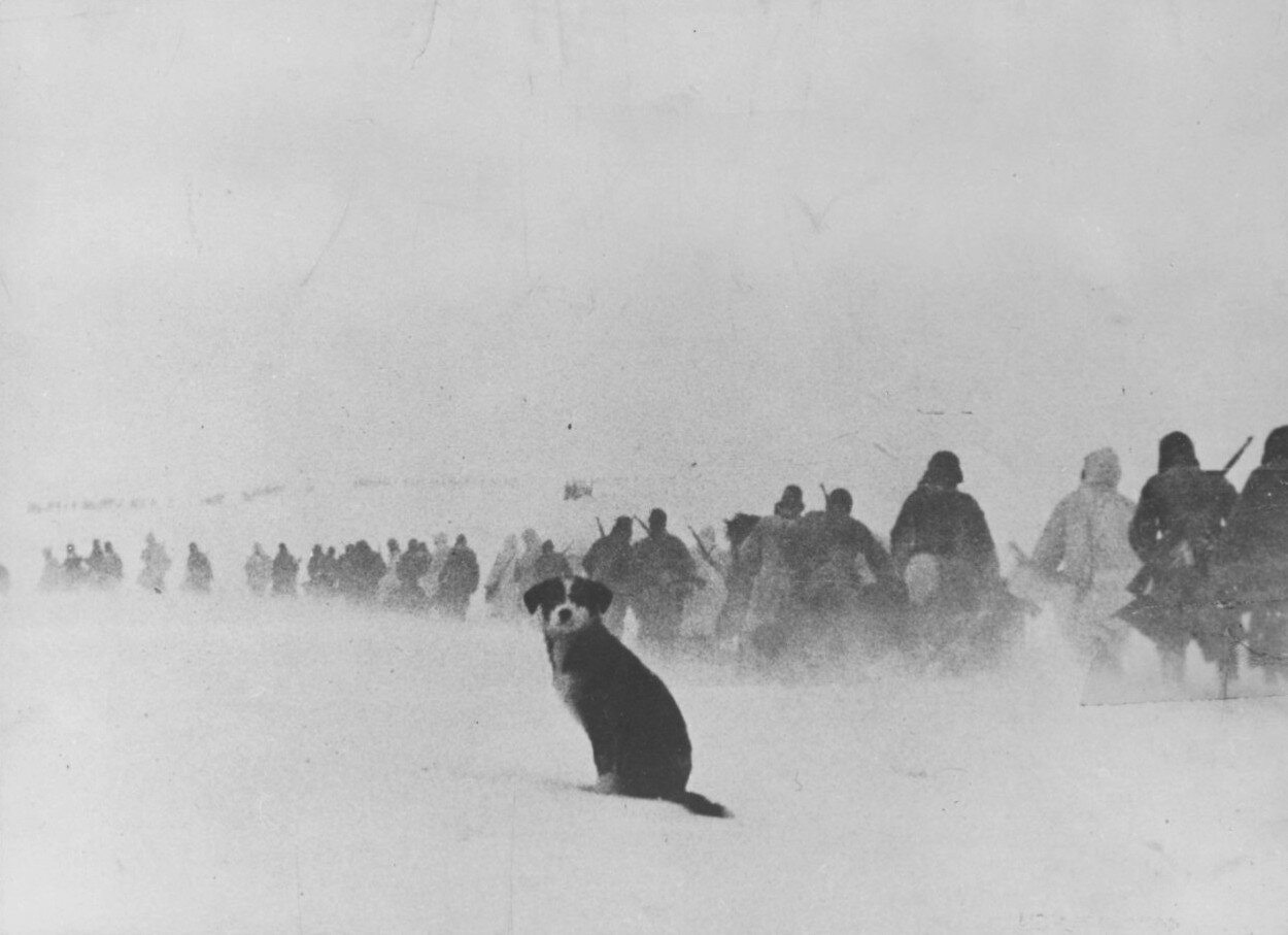 Сталинград, зима 1942-43 г. История в кадрах