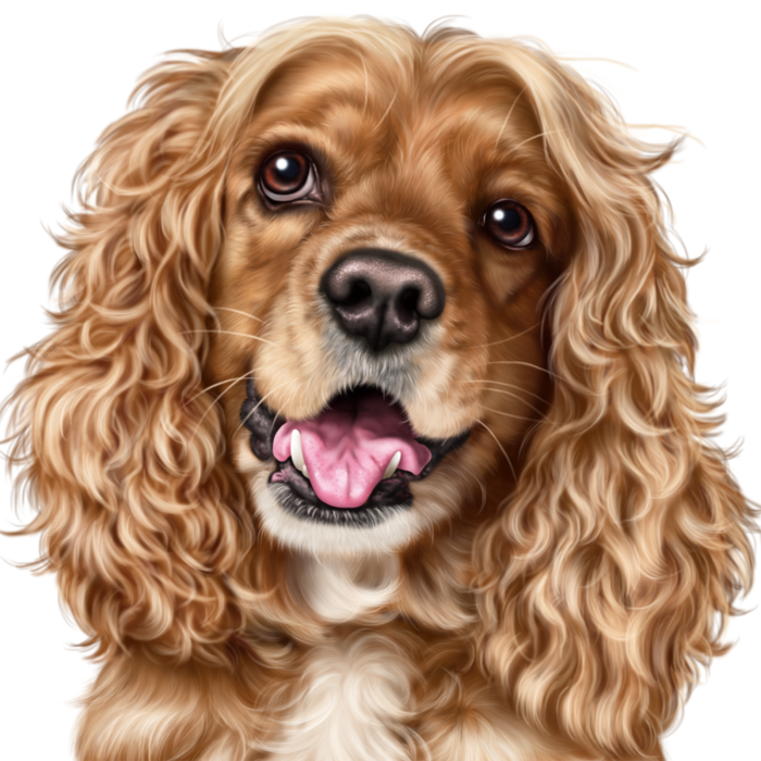 134569428_6090083_angel_spaniel5.png