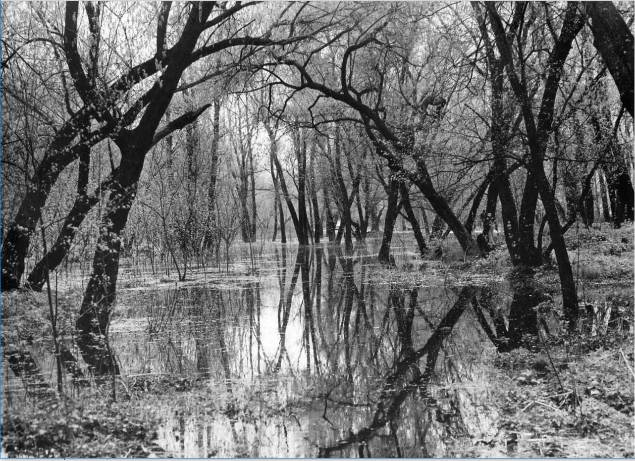 1978. Весна