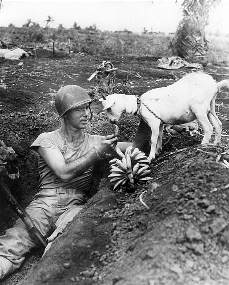 Во время битвы за Сайпан в 1944-ом году, американский солдат делится бананами с козочкой(пост-2).