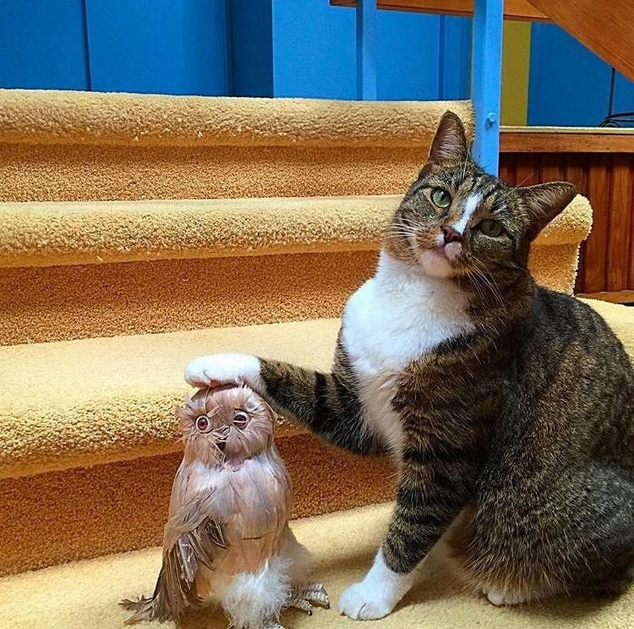 Картинка коты юмор