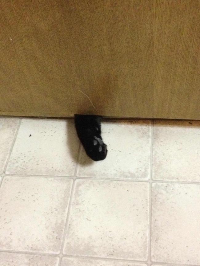 © imgur  «Нувпустиже меня! Мне нужно войти! Чтобы потом... сразу выйти».