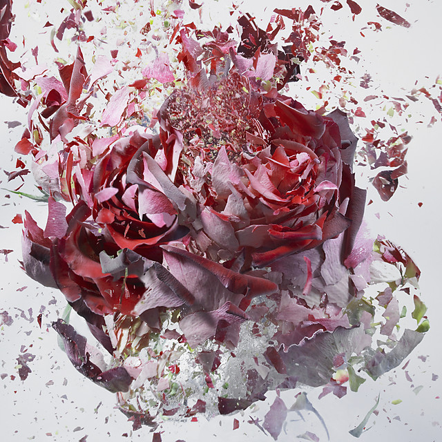 High Speed Flower Explosions by Martin Klimas
