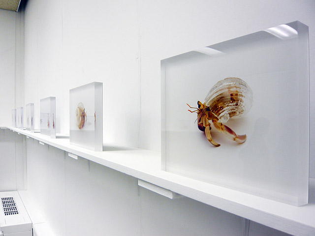 Installation view at Ai Kowada Gallery / © Aki Inomata courtesy of Ai Kowada Gallery Created in