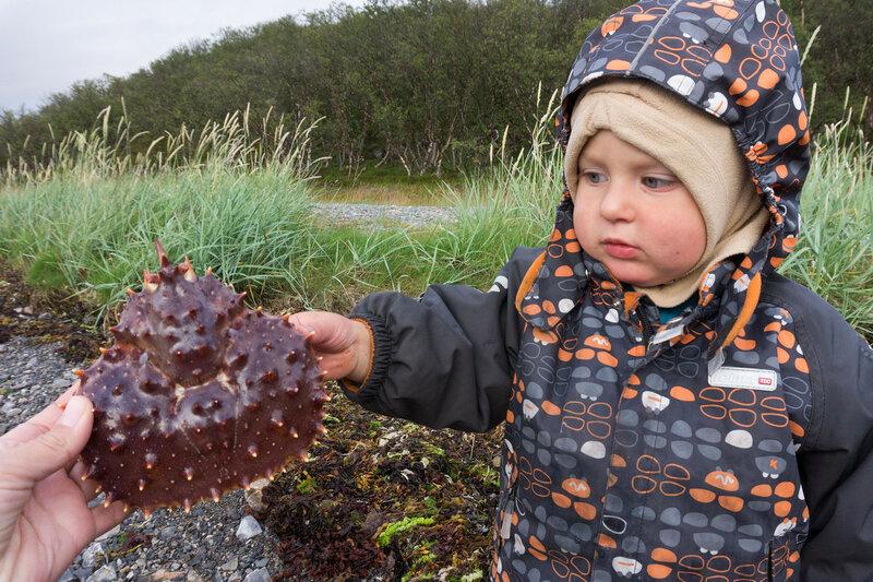 ребенок и панцирь камчатского краба на баренцевом море в норвегии