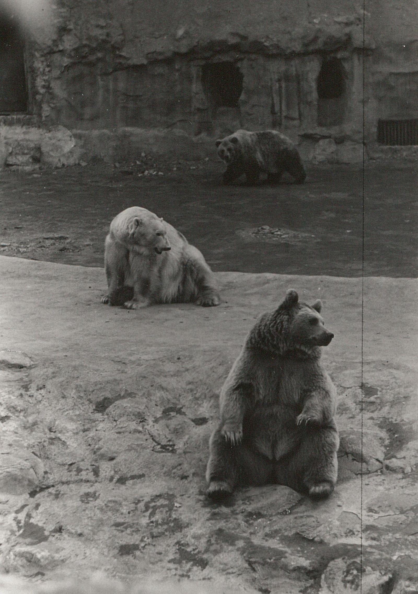 Московский зоопарк. Медведи