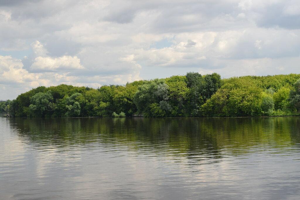 Деревья смотрят в гладь Москвы-реки........